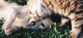 Faire le bon choix des aliments pour animaux de compagnie