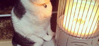 Ces photos hilarantes d'un chat qui tombe amoureux d'un chauffage égailleront votre jour