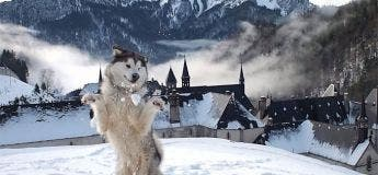 Quand les animaux découvrent la neige pour la première fois