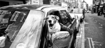 Des portraits de chiens atypiques faites par un photographe lors de ces voyages à travers le monde