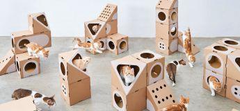 Un couple d'architectes transforme des boîtes en carton en maison de rêve pour les chats