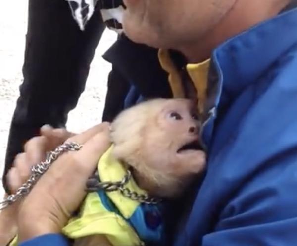 Un singe de cirque revoit son précédent maitre et pleure de bonheur de le revoir