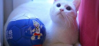 Un chat sourd sera l'oracle officiel de la Coupe du Monde 2018 en Russie