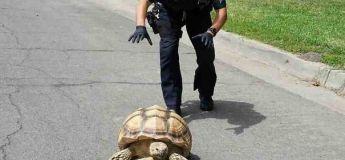 La police a un grand sens de l'humour, la preuve (+20 photos)