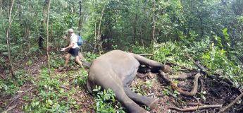 Mieux vaut ne pas rester près d'un éléphant qui se réveille