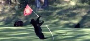 L'ours en mode pole dance sur ce poteau de golf