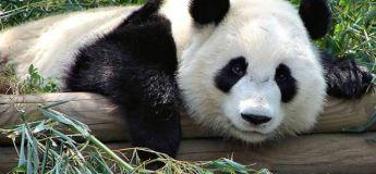 Étonnamment ces animaux sont dangereux pour l'homme, découvrez pourquoi !