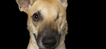 La parfaite imperfection des chiens à handicap, capturée par un photographe animalier