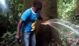 Découverte d'un arbre qui crache de l'eau