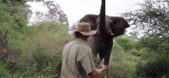 OKLM, il maitrise cette charge d'éléphant comme personne