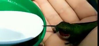 Ce colibri atterrit dans sa voiture et ne veut plus le quitter