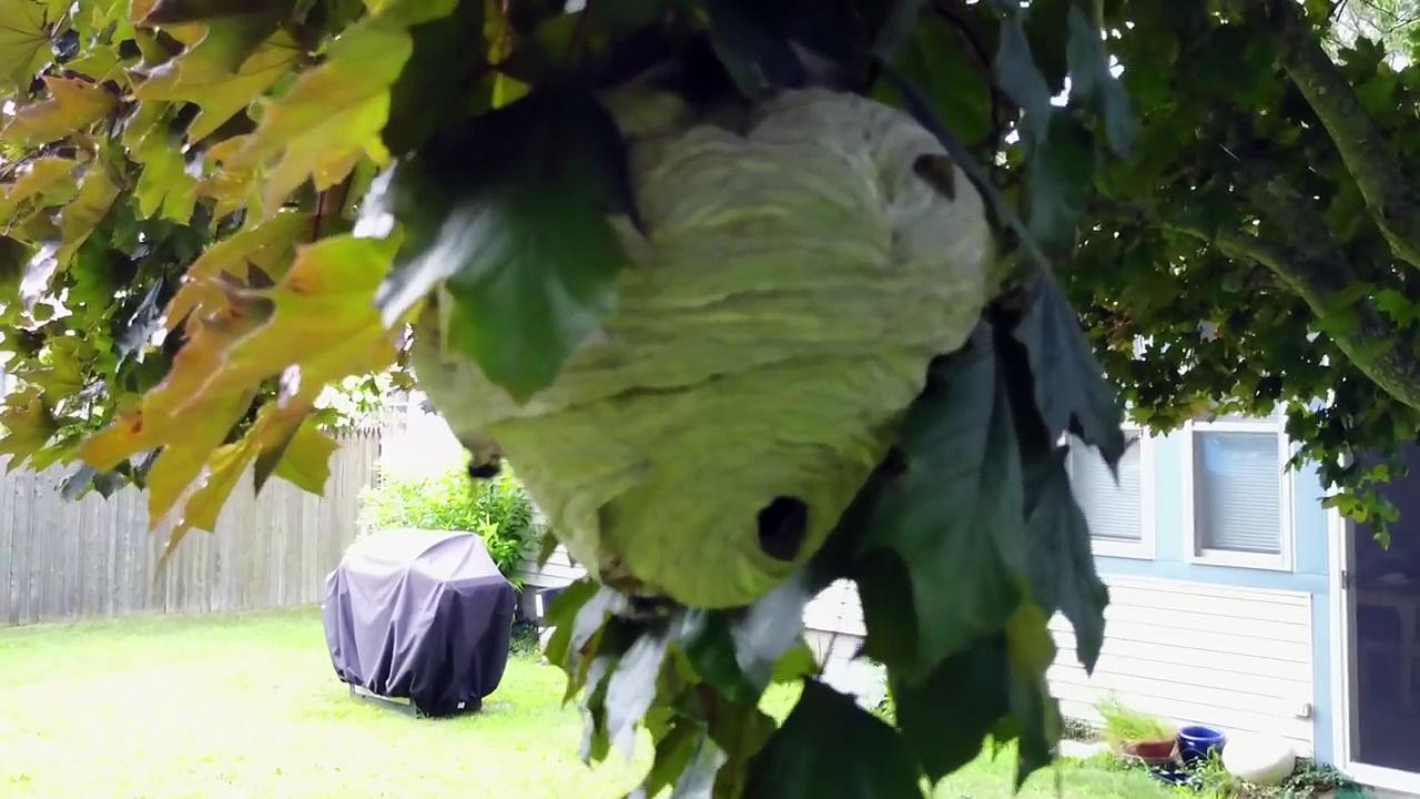 comment un drone peut aider d truire des nids de frelons dans les arbres. Black Bedroom Furniture Sets. Home Design Ideas