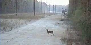 Le pire chasseur face au cerf le plus naïf du monde