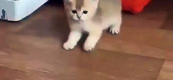 Un chaton beaucoup trop meugnon à regarder aujourd'hui !