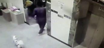 Un coursier lâche immédiatement ses affaires pour sauver ce chien d'une mort affreuse