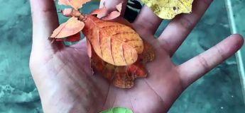 Des insectes de feuilles vous montrent comme quoi la nature peut être géniale