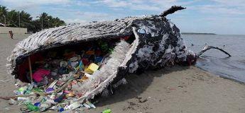 Mythe : Une baleine est morte en mangeant des déchets plastiques