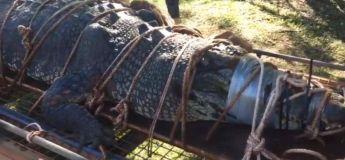 Après des années de traque, un énorme crocodile monstrueux finit par se faire capturer