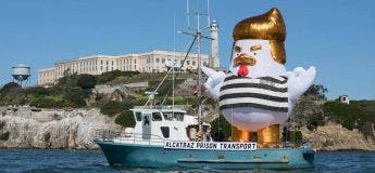 Le poulet gonflable à l'effigie de l'actuel président des États-Unis refait son apparition