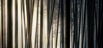 Robin des bois (Streaming, Synopsis, Casting, Bande annonce)
