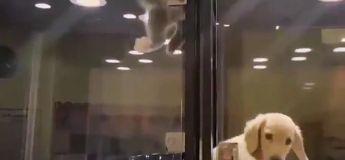 Trop cute, ce chaton fait le mur pour aller voir son pote