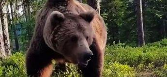 Tu pensais dormir tranquille dans ta tente quand un ours est venu te rendre une petite visite