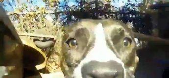 Une caméra située à l'avant d'un chien qui court > vos vidéos GoPro de l'été