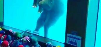 Des éléphants forcés à nager dans un Zoo de Thaïlande