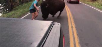L'idiot absolu se confronte à un bison à Yellowstone