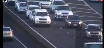 Quand les conducteurs sur l'autoroute cèdent le passage à une famille de canard