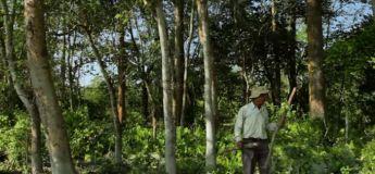 Un homme plante une forêt à lui seul pendant près de 40 ans