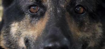 La chienne qui a découvert les 9 tonnes de drogue en Colombie devient la cible des trafiquants