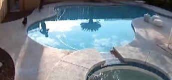 Par in extrémis un homme sauve son chiot de la noyade (vidéo)