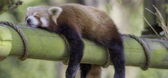 La paresse augmente la longévité selon une nouvelle étude
