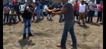 Ce combat de coq ne se déroule pas comme prévu