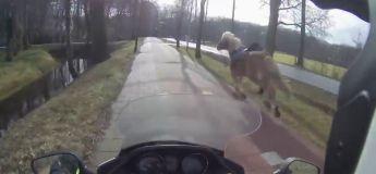 Ce scooter aide cette cavalière à récupérer son cheval parti comme un fou