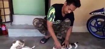 La technique ultime pour calmer ces chatons