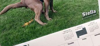 Le calendrier 2019 de chiens faisant caca vient de sortir, c'est le calendrier le plus fou que nous ayons jamais vu