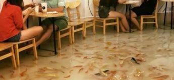 Le restaurant qui vous permet de diner avec les poissons à vos pieds