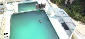 Scandale : un dauphin laissé à l'abandon dans une piscine d'un Marine Land fermé