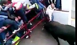 Un homme se fait déchiqueter par un taureau lors d'un lacher dans ce village