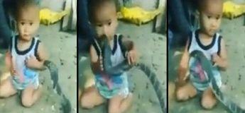 Un petit garçon joue avec un cobra, la vidéo flippante du jour