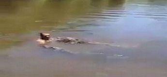 Alligators et humain dans un même étang : se jeter dans la gueule des dangers ?