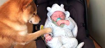 Ce chien caline ce bébé, on atteint le paroxysme de la mignonnerie ! ❤