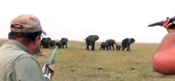 Ces chasseurs tuent un éléphant du troupeau et se font courser par les géants tristes et mécontents