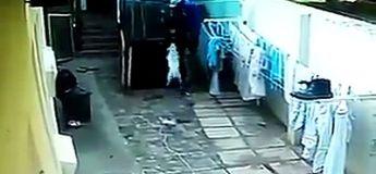 Les chiens de garde ont attrapé un voleur en flagrant délit, pas de bol pour lui