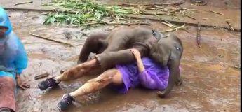 Moment cute avec cet éléphanteau beaucoup trop calin