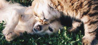Les actions incroyables des animaux qui ont créé la surprise