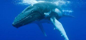 Une Américaine terrifiée par des baleines, appelle la police (vidéo)