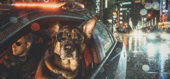 Des chiens policiers de Vancouver posent pour des photos très cool afin de lever des fonds